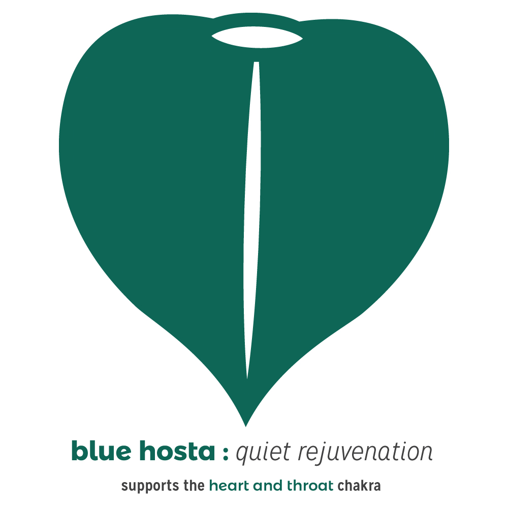 Color of the Week: June 14th, 2016- Blue Hosta- A Quiet